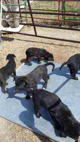 6 Adorable Puppies For Sale