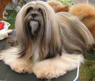 images/breed/196.jpg
